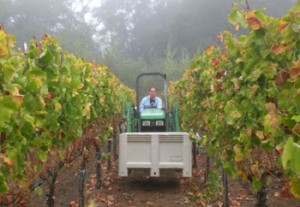 Viszlay Vineyards Wine from Sonoma County California