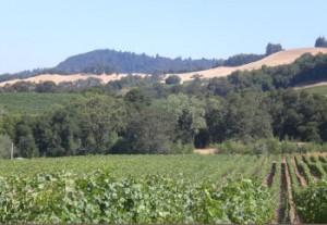 Viszlay Vineyards Sonoma County California